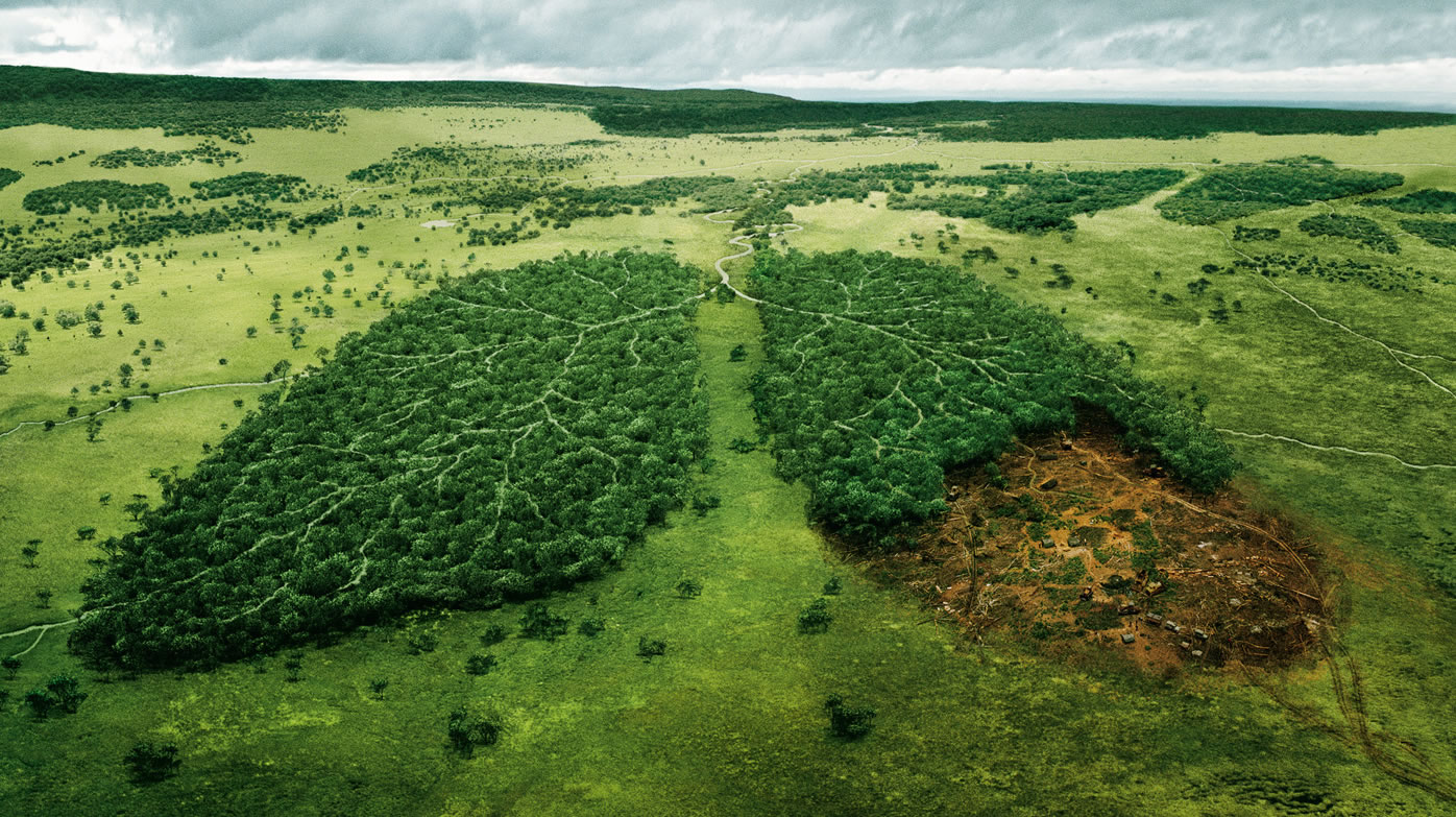 the negative impact of deforestation Deforestation has many negative effects on environment the two most negative effects of deforestation are climate change and extinction of species despite these negative consequences of deforestation forests and rainforests are still being cleared in many parts of the world.